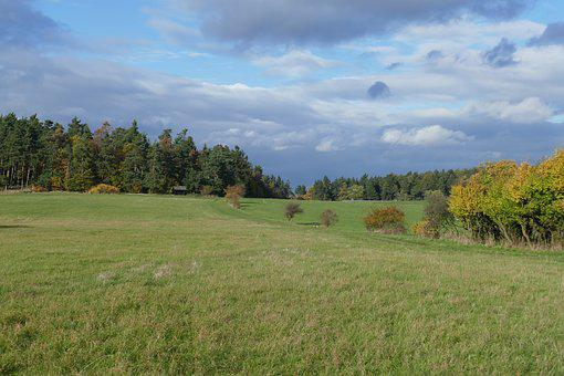 Meadow, Perspective, Landscape, Autumn, Forest