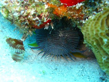 Fish, Ocean, Underwater, Aquatic, Animal, Wildlife