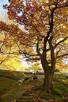 Tree, Autumn, Light, Beech, Rock, Nature, Forest