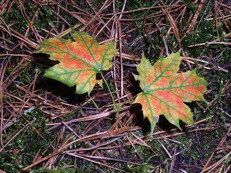 Forest, Nature, Mushroom Picking, Toxic, Autumn
