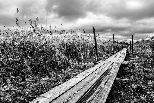 Reed, Pathway, Grass, Nature, Wooden, Walkway, Cloudy