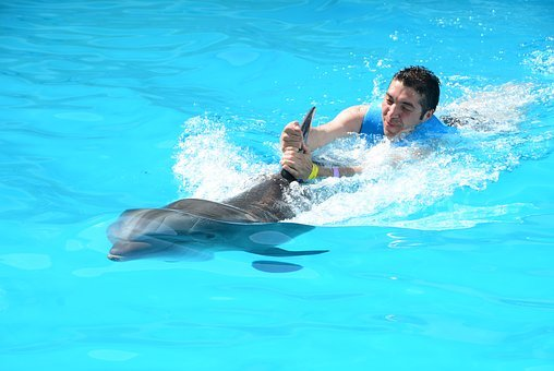 Oceanic Dolphins, Dolphins, Marine Life, Fish In Water