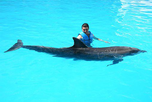 Dolphins, Marine Life, Fish In Water, Oceanic, Fish
