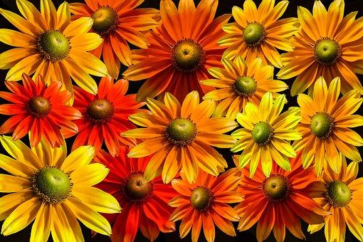 Blütenmeer, Bloom, Sun Hat, Gerbera, Colorful, Flowers