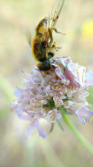 Spider Eating A Bee, Macro, Nature, Insect, Plants