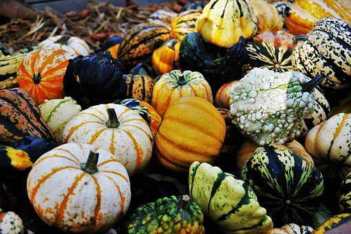 Thanksgiving, Decorative Squashes