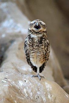 Bird, Winged, Feathered, Nature, Beak, Birds, Fauna