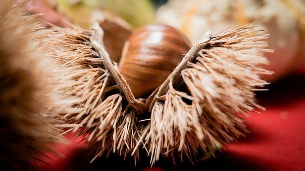 Chestnut, Chestnut Shell, Fruit Cups, Prickly