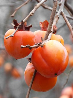 Khaki, Rosewood, Fruit, Autumn