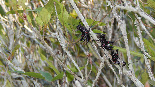 Cricket, Insect, Nature, Animal, Antennas, Animals