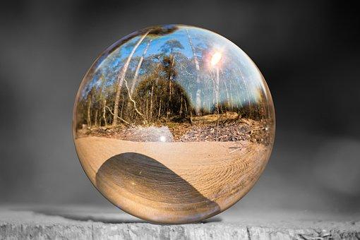 Glass Ball, Tree Stump, Forest, Sunshine, Sunny