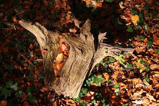 Root, Autumn, Fall Foliage, Mood, Tree Stump, Tree Root