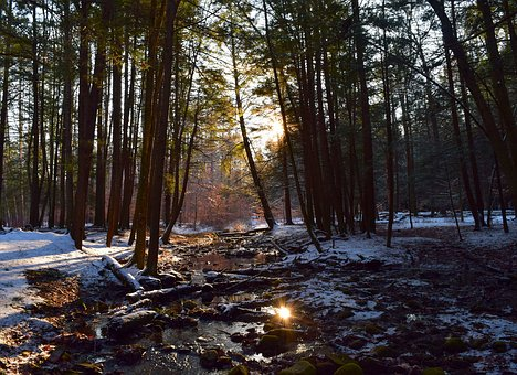 Winter, Snow, Forest, Sunlight, Cold, Nature, Landscape
