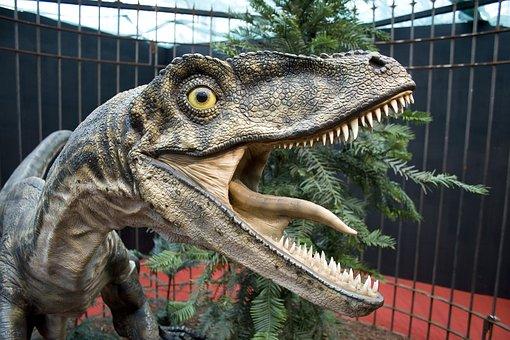 Dinos, Velociraptor, Raptors, Dinosaur