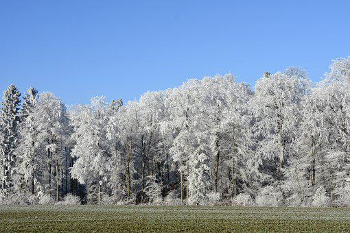 Wintry, Winter, Trees, Forest, Morgentau, Ripe, Nature