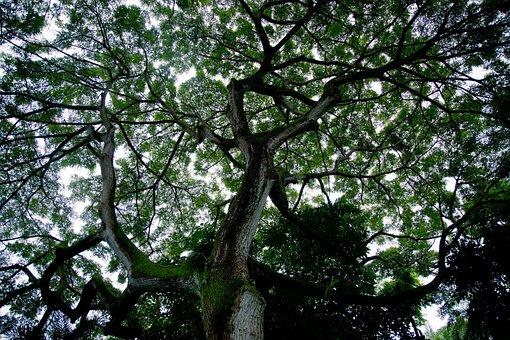 Tree Silhouette, Tree, Sky, Silhouette, Canopy, Natural