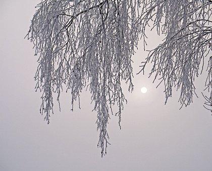 Nebelmorgen, Hoarfrost, Cold, Birch, Sunburst