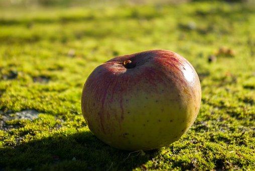 Apple, Fruit, Moss, Lichen, Nature, Fresh, Green
