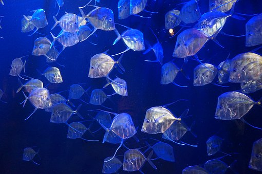 Fish, Aquarium, Water, Underwater, Animal, Aquatic, Sea