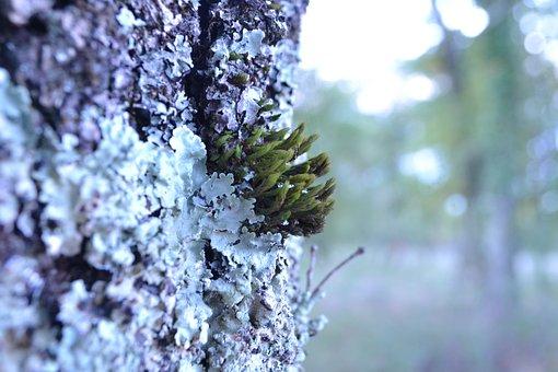 Foam, Trunk, Forest, Wood, Nature, Trees, Green, Lichen