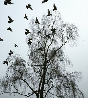 London, Winter, Startled Pigeons, Cold, Drab, Bare Tree