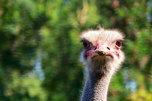Bouquet, Bird, Animal, Bill, Wildlife Photography