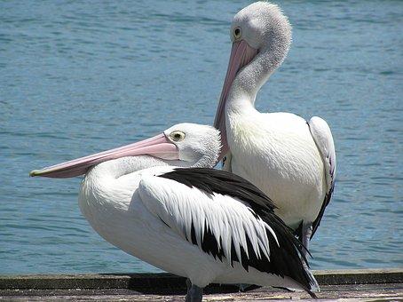 Water, Holiday, Sea, Pier, Pelican, Summer, Birds