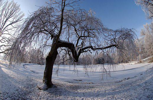 City Park Gotha, Ice, Winter, Frost, Cold, Nature
