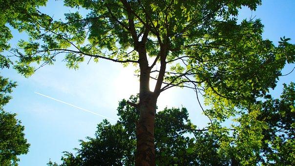 Sun, Tree, Sky, Green, Nature, Landscape, Summer, Crown
