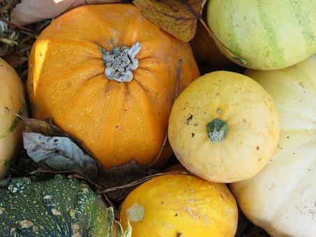 Gourd, Pumpkin, Fruit, Halloween, Autumn, Orange
