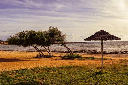 Beach, Trees, Umbrella, Empty, Winter, Scenery