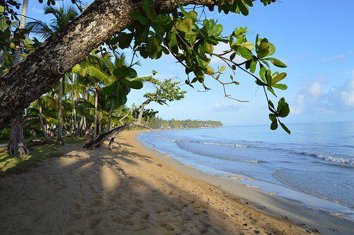 Caribbean, Sea Grape, Beach, Las Terrenas