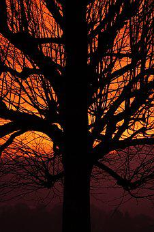 Tribe, Log, Branches, Sunset, Tree, Aesthetic