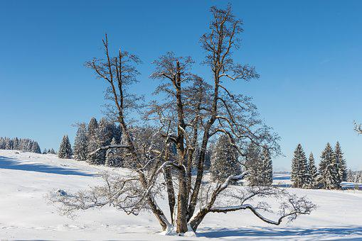Winter, Snow, Tree, Wintry, Cold, Landscape, Snowy