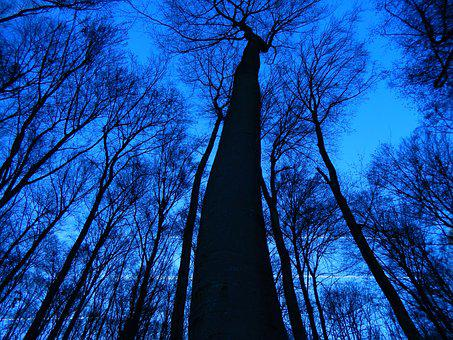 Trees, Sky, Nature, Canopy, Without Sheet, Blue Sky