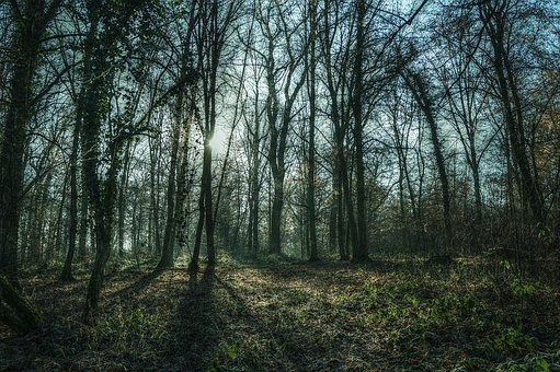 Forest, Trees, Nature, Landscape, Frost, Sunshine, Cold