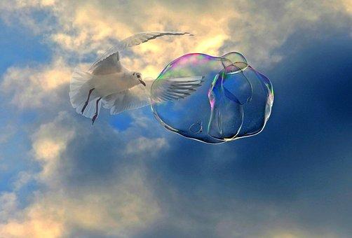 Soap Bubble, Fly, Seagull, Bird, Float, Ease, Sky