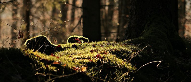 Forest, Light, Mood, Light Beam, Sun, Trees, Lighting