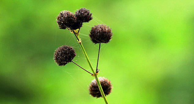 Grass, Wild, Nature, Plant, Field, Natural, Green