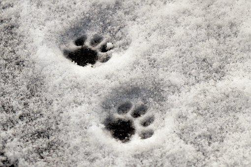 Paws, Cat's Paw, Reprint, Snow, Snow Lane, Winter