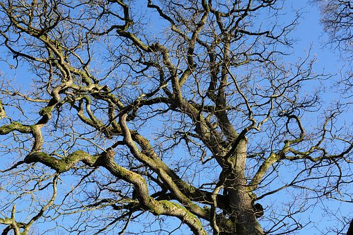 Tree, Branch, Bark, Log, Kahl, Branches, Crown, Plant