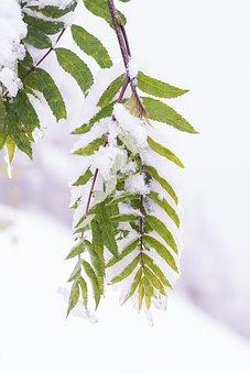 Winter, Aesthetic, Snow, Winter Time, Snowfall