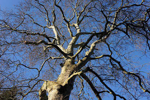 Tree, Tribe, Log, Wood, Nature, Bark, Branch, Sky