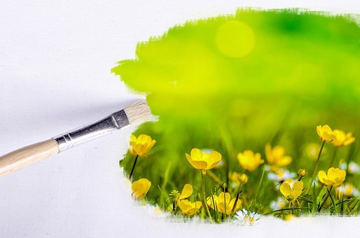 Paintbrush, Outdoor, Flower, Flowers, Sunlight