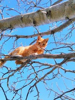 Cat, Tree, Cute Cat, Small, Fur, Paw, Play, Animal, Pet