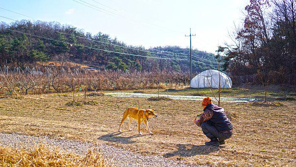 Country, Dog, Man, Mountain, Youngcheon, Rural