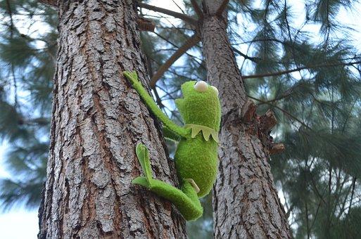 Kermit, Rene, Green, Tree