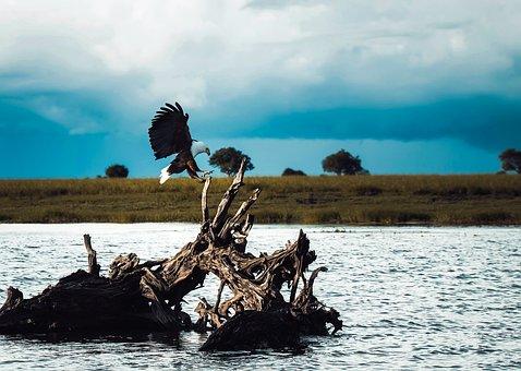 Bald Eagle, Majestic, Bird, Wildlife, Symbol, Sky