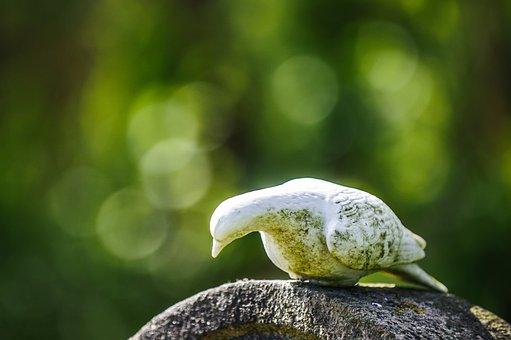 Dove, Bird, Burial, Cemetery, Bokeh