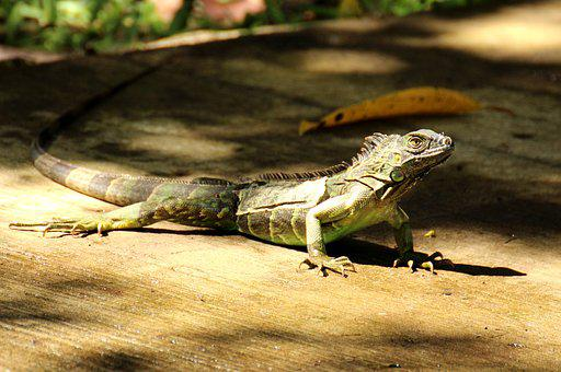 Costa Rica, Tropics, Central America, Tropical, Nature